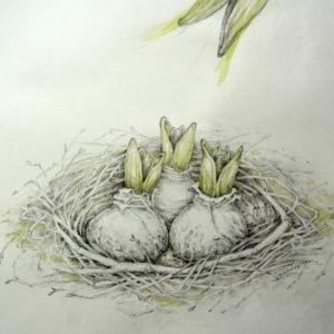 Grünschnabel, Zeichnung, aquarelliert, Sandra Lamzatis 2020