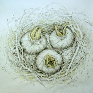 Exotische Brut, Zeichnung, aquarelliert, Sandra Lamzatis 2020